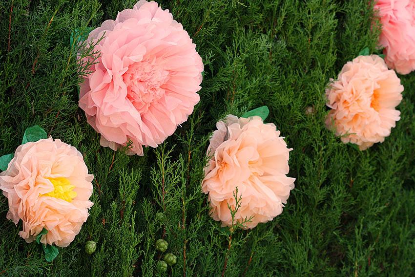 flores-pompon-jardin-comunion